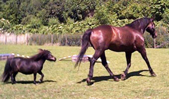 mistral-en-ilka-dieren-pleeg-en-jeugdzorgboerderij-de-essenburg