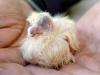 baby-duif-dieren-pleeg-en-jeugdzorgboerderij-de-essenburg