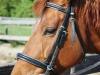 jinty-dieren-pleeg-en-jeugdzorgboerderij-de-essenburg