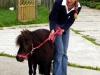 shetlander-dieren-pleeg-en-jeugdzorgboerderij-de-essenburg
